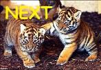 TE next